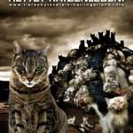 Kastration rettet Katzenleben