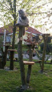 kratzbaum jenny