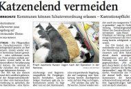 Katzenelend vermeiden