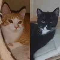 Wer schenkt zwei traumhaften Katzen  ein Zuhause?