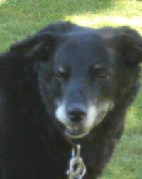 Bobby – ein Hundesenior in Not!