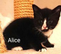 Alice und Ella sind umgezogen!