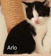 Arlo und Spot haben ihre Menschen gefunden!