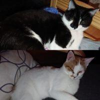 Duracell und Gideon…sie sind  im neuen Leben angekommen