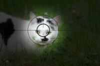 Abschuss von Hauskatzen im niedersächsischen Jagdrecht | Petition