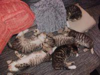 Die ersten Katzenbabys werden groß