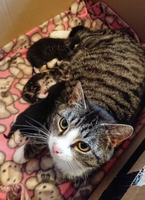 Die Kitten wachsen und gedeihen…