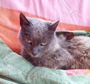 Neema, die Katze aus Werdum…