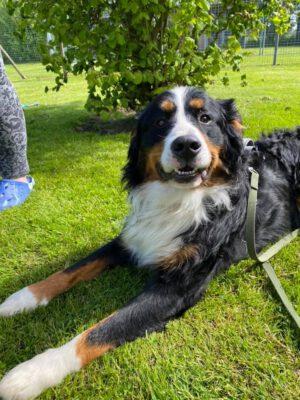 Bruno, de Hund de ut Moor keem