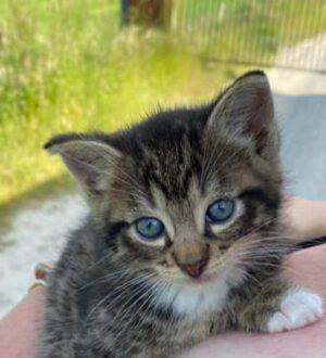 Und wieder ein kleines Kätzchen