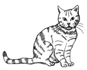 Bengal Katze Luna ist wieder da