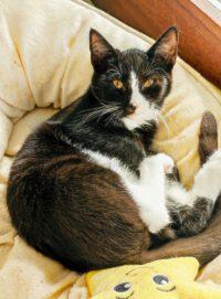 Kitten aus Toquard umzugsbereit